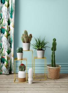 Decoración para septiembre - cactus